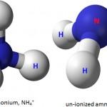 ammonia nitrogen