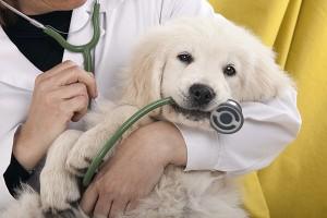 Animal Services